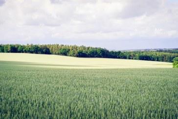 Посевите не пострадаха от последните студове