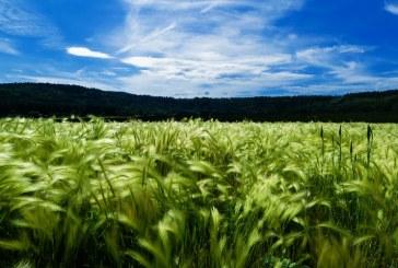 Започва третирането на посевите с пшеница и ечемик в Шуменско