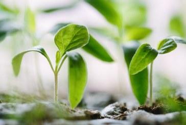 България затяга контрола за въвеждане на растения от трети страни