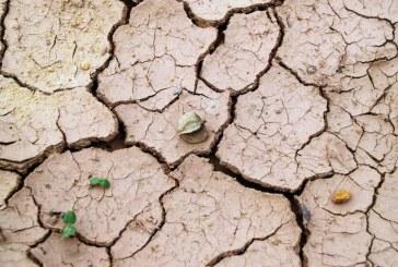 Посевите в Шуменско страдат от засушаването