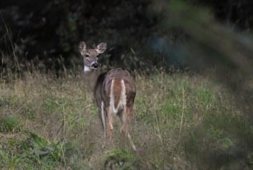Ловец застреля незаконно сърна в Добричко