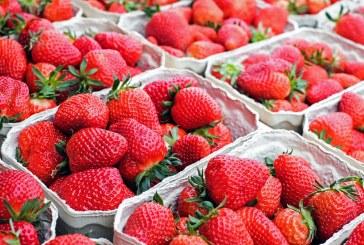 При правилно съхранение ягодите могат да се запазят свежи за дълго