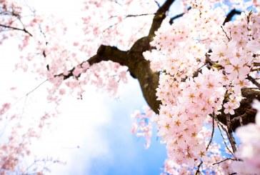 Пожелахме си пролет и тя чука на вратата