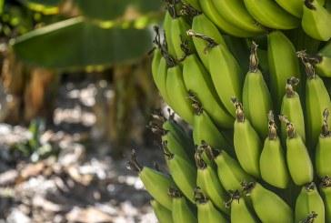 Яжте по два банана на ден и вижте какво ще се случи с тялото Ви