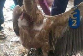 В Йемен конфискуваха български лешояд