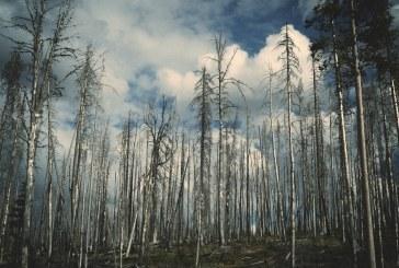 Пожар обхвана над 100 декара гора