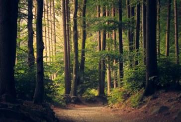 До дни държавата трябва да оповести пазарните оценки на скандалните горски заменки