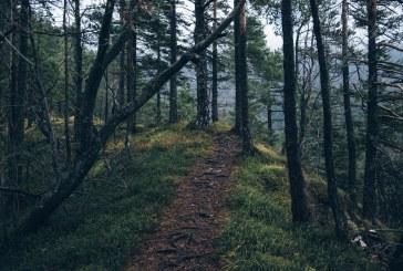 Неправителствени екологични организации обсъдиха широк кръг от въпроси в горския сектор