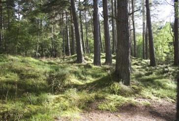 С 54% повече заявления са подадени през настоящата кампания за закупуване на малки горски имоти