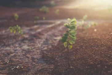800 дка нови гори ще бъдат залесени