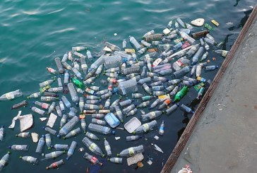 Рибата умира заради замърсяването с пластмасови отпадъци