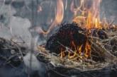 Пожари унищожиха над 5 000 дка сухи треви и храсти