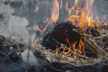 Паленето на стърнища и растителни остатъци е причинило 63 пожара в Плевенско