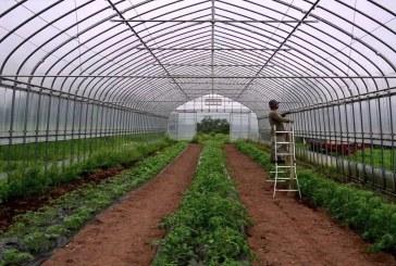 Растителнозащитни практики в оранжериите и зеленчуковата градина