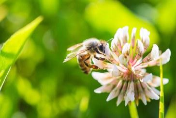 Започна приемът по новата пчеларска програма