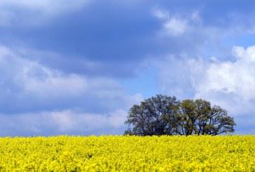Рекорден внос на рапица в ЕС пpез новия стопански сезон