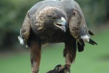 Нужно е да опазим местообитанията на дивите птици