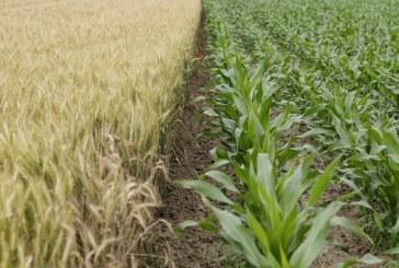 Повишение при всички зърнени контракти по световните борсови пазари