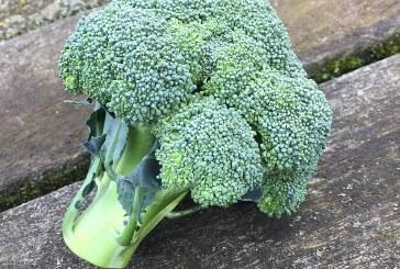 От какви болести ни пази консумацията на броколи
