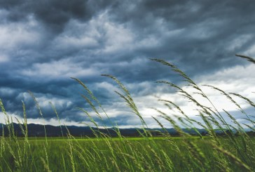 Вятър с пориви до 24 м/с се очаква в Северозападна България