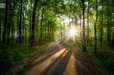 Залесяването на горите трябва да се планира за години напред