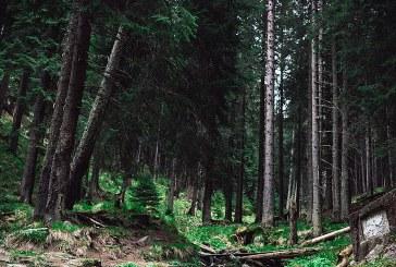Климатичните промени съсипват горите