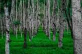 Защо е нужно залесяване на горските територии