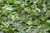 Почти по 700 дка с ечемик и слънчоглед са напълно унищожени в Русенско