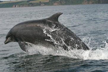 Четири пъти по-малко мъртви делфини по Черноморието спрямо 2016 г.