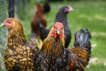 Схемата за хуманно отношение към птиците вече е с разширен обхват на подпомагане