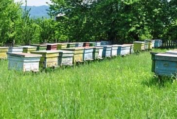 """Какви теми заинтригуваха пчеларите на семинара """"Пчелите и хората – заедно"""""""