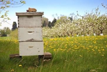 България сред лидерите в Европа по брой пчелни кошери