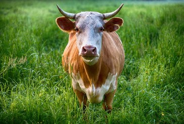По-високи ставки за животновъдите и по-малко мляко за доказване