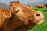 26,3 млн. лв. ще получат животновъди