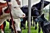 Изплатиха близо 80 млн. лева на животновъдите за Кампания 2019