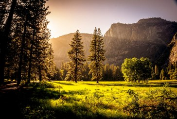 България – единствената държава в ЕС без горска инвентаризация
