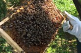 Предстои третиране с препарати за растителна защита в град Шумен