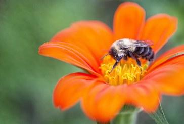 Смъртността на пчелите в Смолянско е над средната