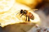 Иновации за пчелари ще бъдат представени на семинар в Стара Загора
