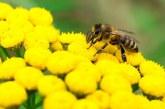 Отбелязваме Световния ден на пчелите