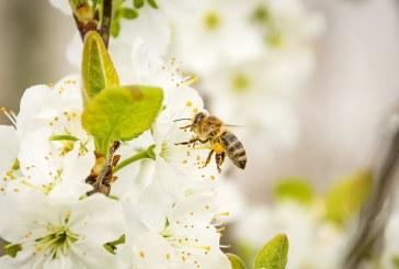 БАБХ: Пчелите в Плевенско не са загинали от препарат за растителна защита