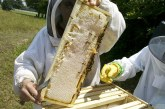 Националната програма по пчеларство за периода 2020-2022 г. вече е одобрена