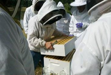 Пръскането на посевите погубва пчелите