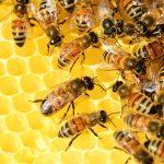ДФЗ обяви прием за пчеларите по три мерки от 5 март до 18 март