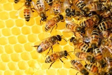 Пчелари готвят протест срещу пръскането с опасни химични препарати