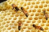 70 % от пчелите в Тервелско са унищожени (ВИДЕО)