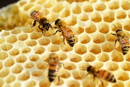 Грижа за пчелите през юли