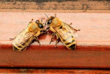 За нов случай на отровени пчели алармират от Благоевград
