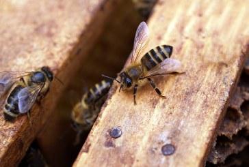 Пръскане с хербициди лиши пчелар и семейството му от субсидии