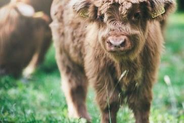 Защо е нужно да защитим животинските и растителните видове